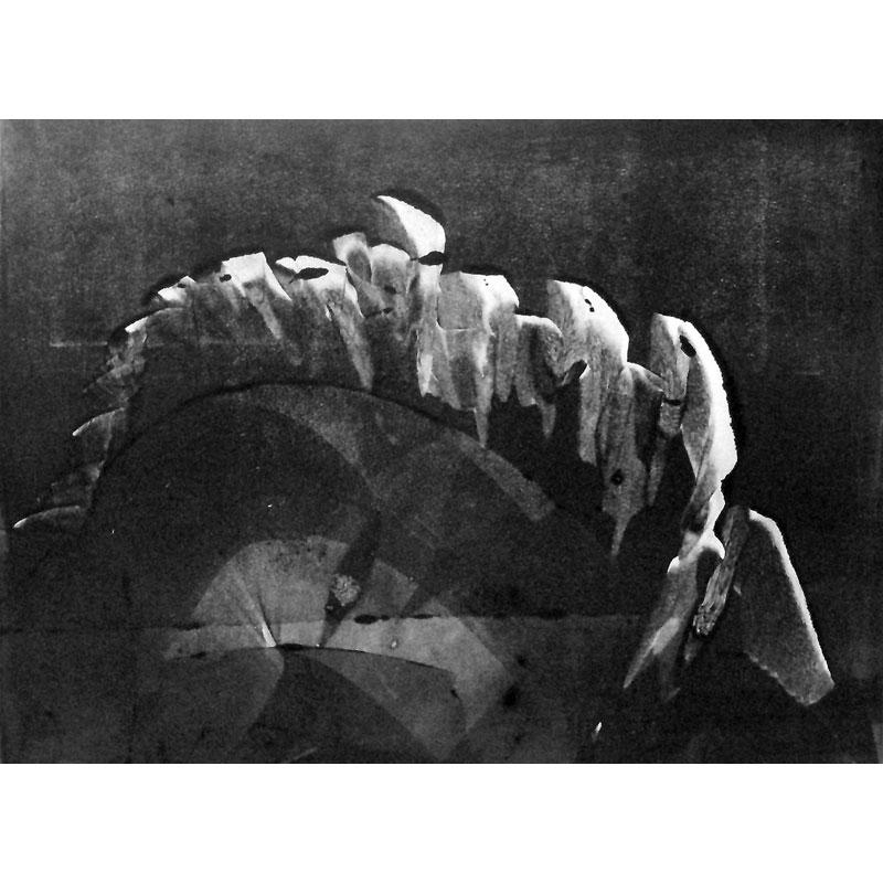 Épine dorsale - LOUIS-ROGER